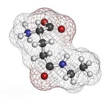 essentielle Aminosäuren - nicht essentielle Aminosäuren