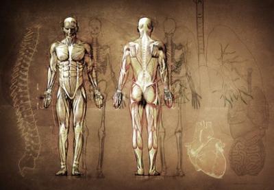 Osteopathie - Behandlung | Osteopath | Kosten
